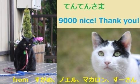 9000nice!.jpg