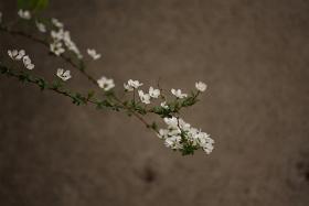 flowers6.jpg
