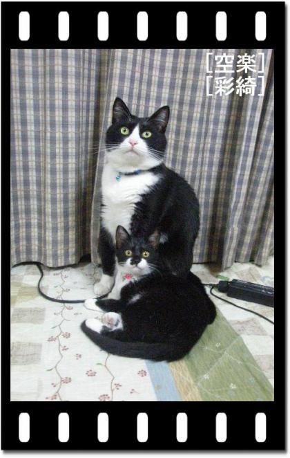 空楽・彩綺.jpg