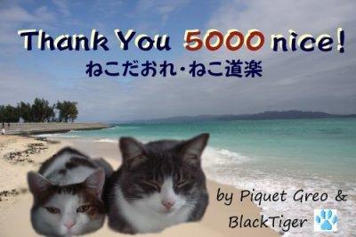 blacktiger5000nice.jpg