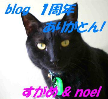 blog1year.JPG
