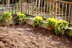garden2-1.JPG